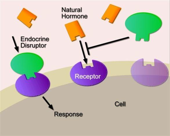 Write my endocrine disruption hypothesis
